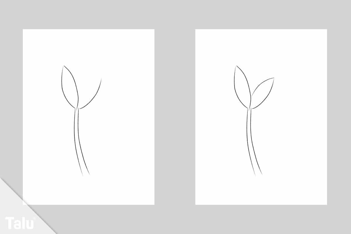 Tulpen zeichnen