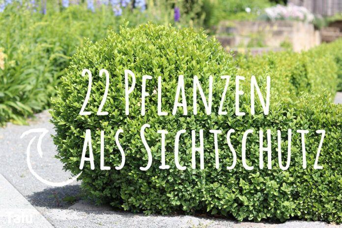 Bepflanzung vor Sichtschutzzäunen