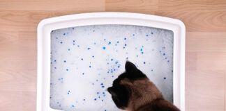 Katzenklo stinkt - die Ursachen